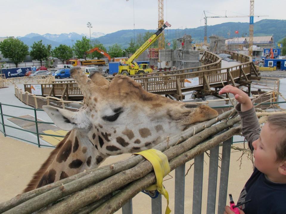 Giraffen streicheln